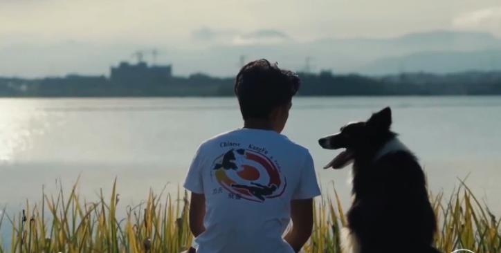 《一条狗的使命2》饭制特辑