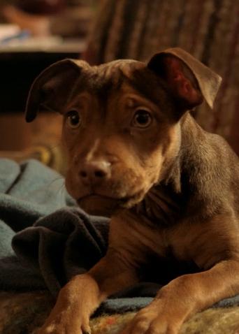 """《一条狗的回家路》特辑 这可能是今年最瞩目的""""狗生逆袭"""""""