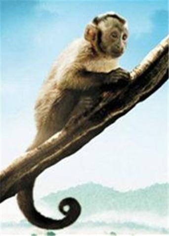 《亚马逊萌猴奇遇记》学霸版预告 丛林动物轮番卖萌