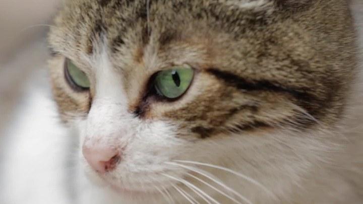 爱猫之城 MV2:宣传曲《成片白鸥掠过》 (中文字幕)