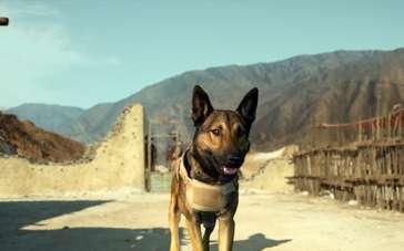 《军犬麦克斯》片段2