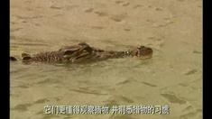 逃亡鳄鱼岛 片段2