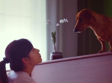 《再见汪先森》定档预告 暖心讲述宠物与主人的爱与陪伴
