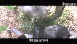 《铁核桃》官方版16分钟高清长片花