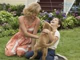 """《一条狗的使命》获评""""史上最萌电影"""" 好评不断票房剑指5亿"""