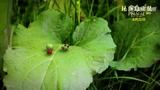 《昆虫总动员》病毒短片之化蝶