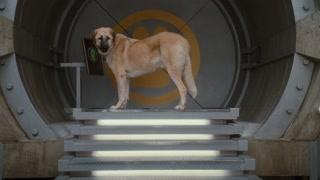 超级狗狗不要面子的吗 怎么可以说晕车