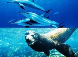 生态大片《海洋》预告片 海底生物遭人类残忍猎杀
