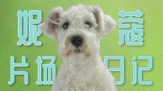 """狗眼看人心 """"妮蔻片场日记之驯兽师""""特辑"""