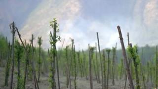 男子苦守岗位只为植树造林 一年种下三万多棵却被洪水冲走一半