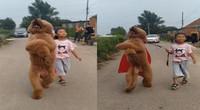 狗遛人?女孩牵着比人还高的泰迪上街 走出六亲不认的步伐