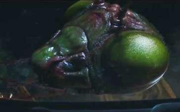《鸡皮疙瘩》精彩片段 杰克·布莱克遭螳螂怪追击