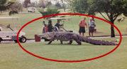 巨鳄现身 路人忙拍照