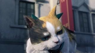 超可爱 这个猫咪天不怕地不怕