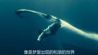 大胆!潜水员与鲨鱼竟和谐相处,背上搭便车同游深海