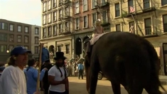 大象的眼泪 拍摄直击-下