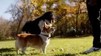 《一条狗的使命》 小短腿艳遇大长腿 春心荡漾忙把妹
