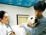 《向日葵与幼犬的7天》 预告片