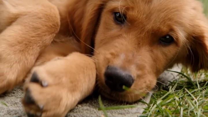 一条狗的使命2 其它预告片2