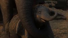 小飞象 迪士尼最萌动物混剪