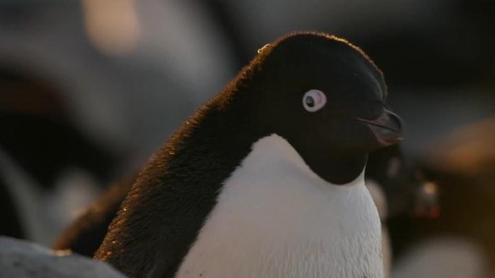企鹅 预告片2