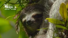 地球:神奇的一天 树懒&蜂鸟&企鹅正片片段