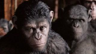 猩猩大军进攻人类领地