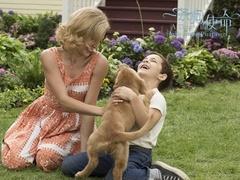 《一条狗的使命》口碑视频 引各年龄层情感共鸣