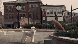 小八偶遇贵宾犬lucky 记者前来火车站打听小八的故事