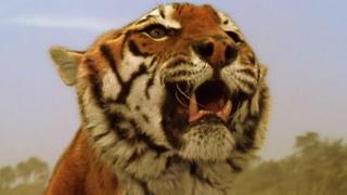 在这里老虎买卖很正常