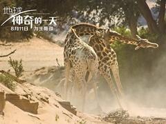 《地球:神奇的一天》特辑 长颈鹿上演暴力互怼