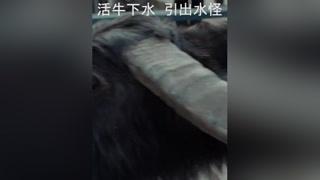 #河神2来了 九头牛都拽不动!!