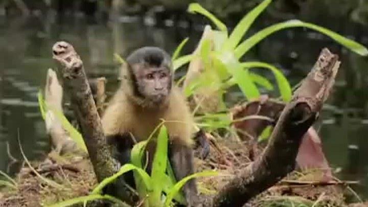 亚马逊萌猴奇遇记 电视版1 (中文字幕)
