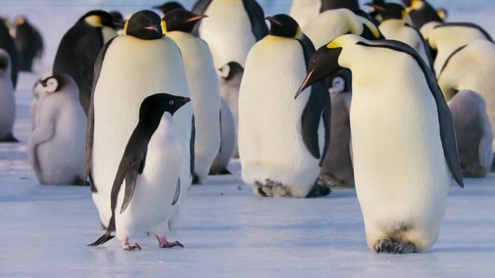 企鹅 预告片1