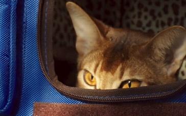 《如何与我的猫分手》特别制作版预告 神奇超能力