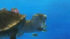 3D海底总动员 片段之Dude