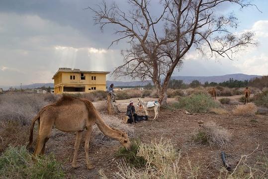 用骆驼换取皮卡:像祖先一样生活的贝都因人