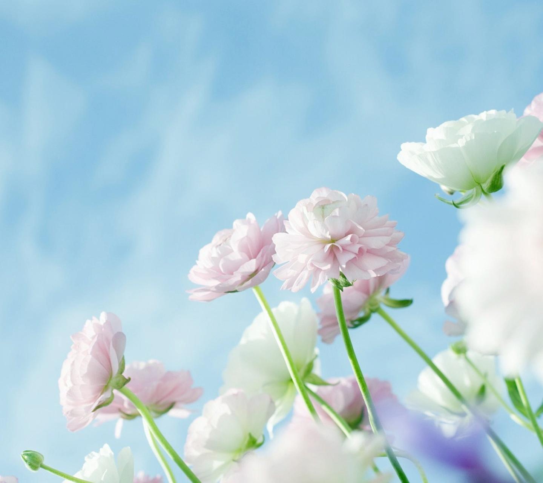蓝天下的小花桌面壁纸