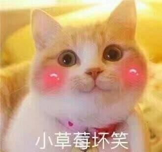 表情 脸红害羞的猫咪 小草莓坏笑 的表情包 图咖秀 表情