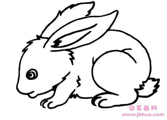 表情 兔子简笔画图片 简笔画网 表情