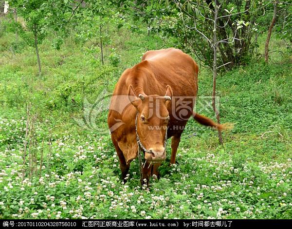 表情 最大的黄牛公牛 公牛历险记简笔画 公牛两开双控接线图 公牛双控开关接线  表情