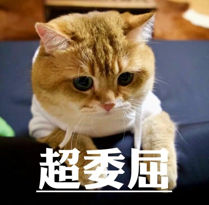 表情 超萌宠物表情包 本大人就是傲娇,皮到你怀疑人生,秀儿扶朕起来 天天快报 表情