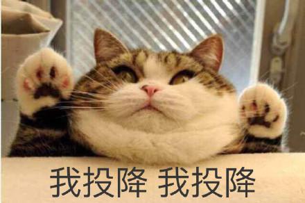 表情 可爱猫咪图片无水印下载 可爱猫咪表情包v1.0.1 无水印版 52下载站 表情