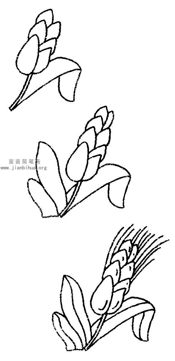 表情 水稻简笔画图片与知识 表情
