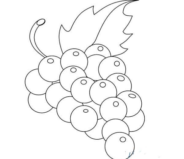 表情 葡萄简笔画图片大全 2 水果简笔画 艺美术 表情