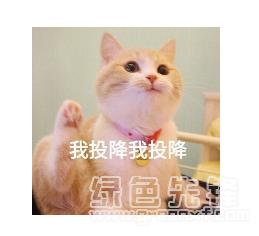 表情 我投降我投降QQ表情包 我投降表情素材 V1.0 官方版软件下载 绿色先锋  表情