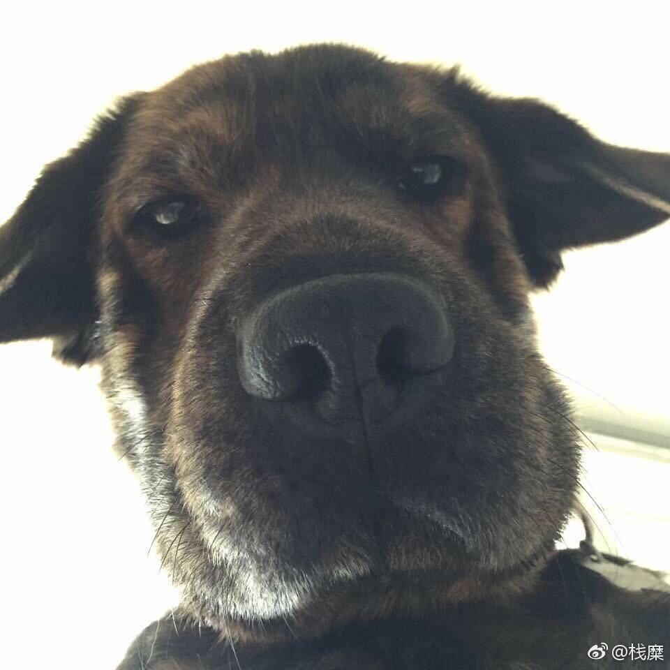 表情 人和狗的情侣头像一 7262图片网 表情