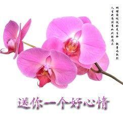 送你一个好心情-表情 我祝你梦想成真 祝福朋友图片 QQ表情党 表情
