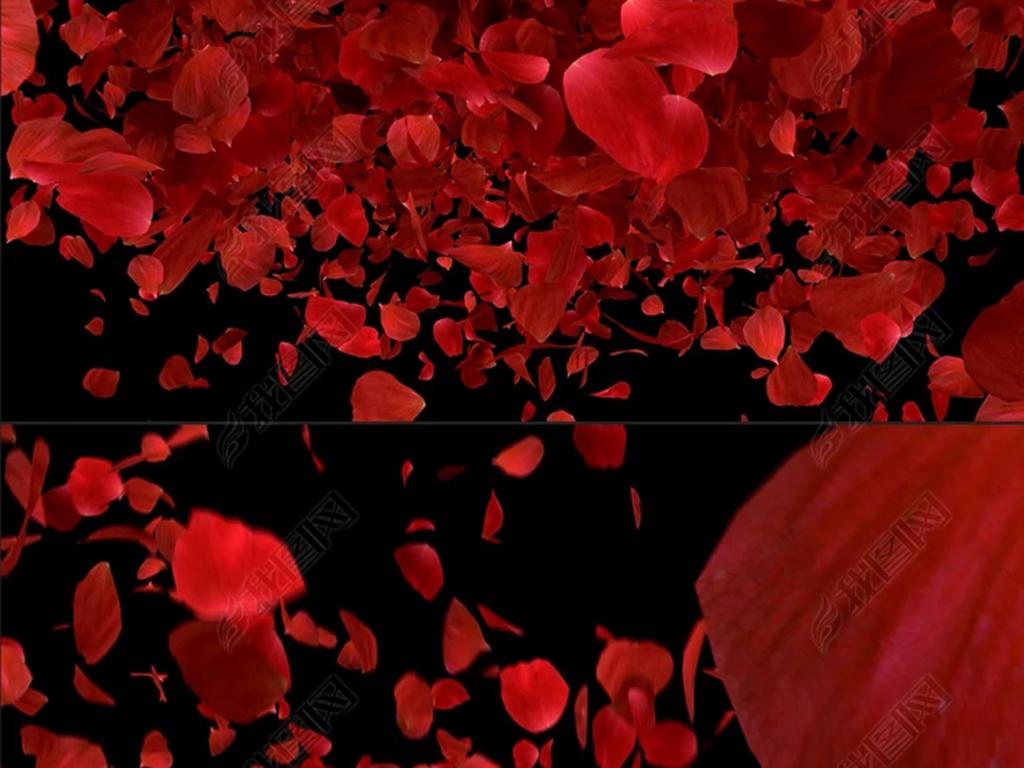 表情 ps玫瑰花瓣飘落素材 玫瑰花瓣飘落背景 玫瑰花瓣素材 玫瑰花瓣飘落 楚楚之家 表情