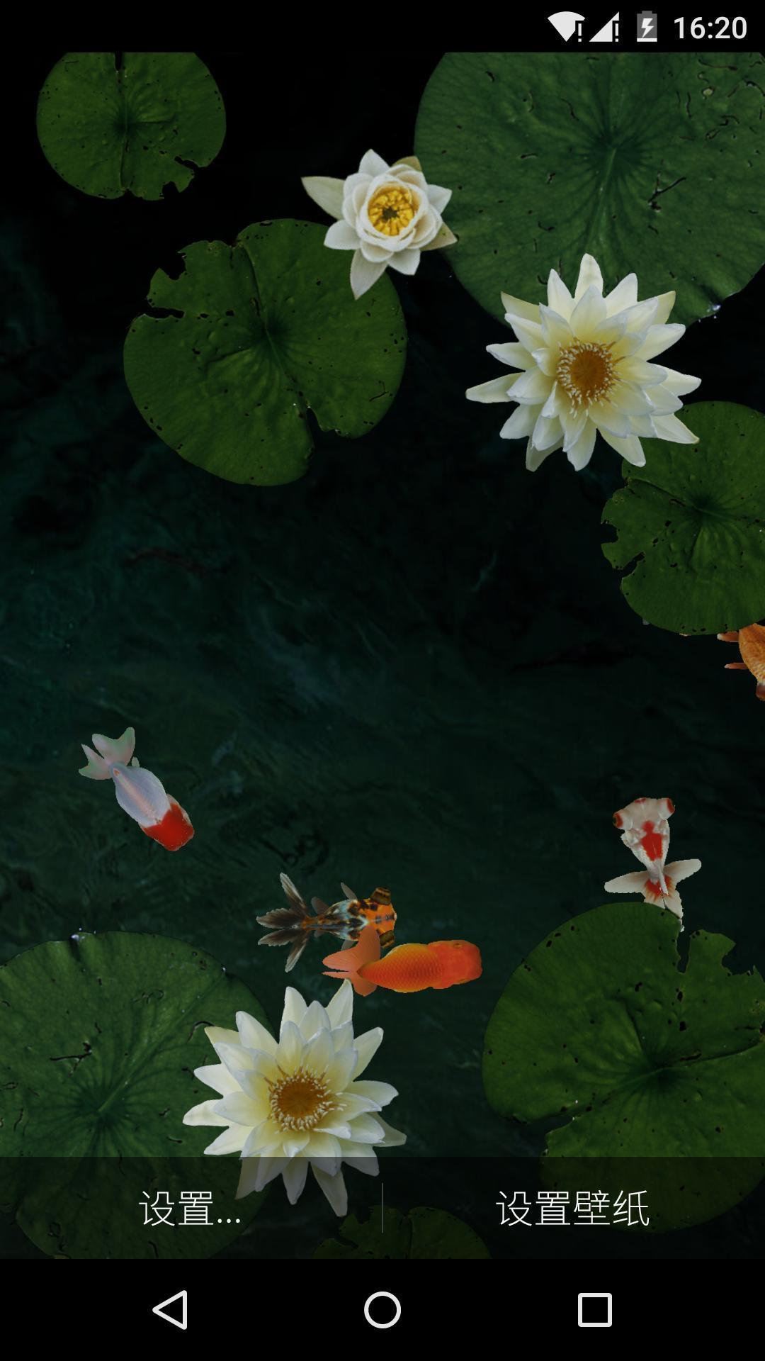 表情 3D池塘里的金鱼 梦象动态壁纸安卓版下载 3D池塘里的金鱼 梦象